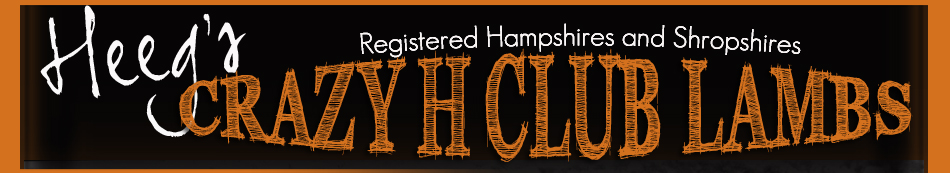 Heeg's Crazy H Club Lambs | Registered Hampshires and Shropshires